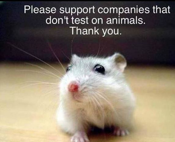 taking a stand against animal testing essay Home essays animal testing is morally wrong essay sample on animal testing is morally wrong specifically for you it is my hope that more corporations especially will take a stand for animals and realize that their actions deeply harm animals and that money is ess important then the.